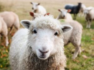 Humans are similar to sheep. We like to get what everyone else has. Make your website social proof stand out.